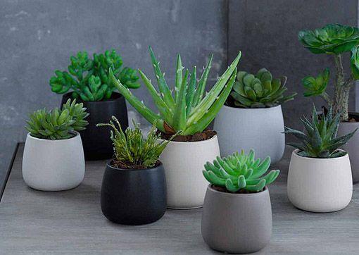 Plantas para realzar decoraciones en tonos oscuros