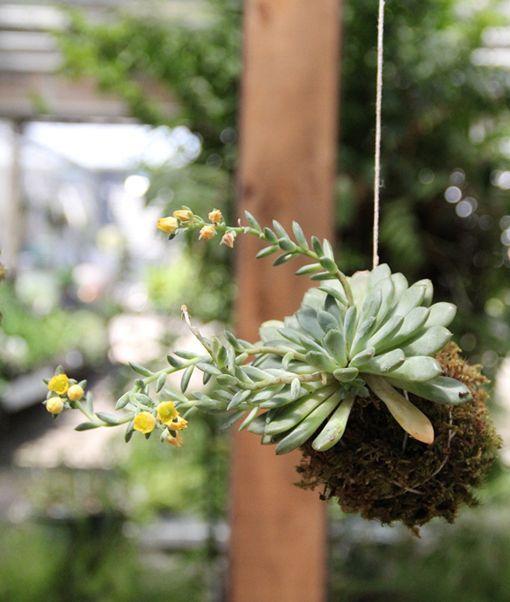 Originales macetas recicladas - Macetas originales para plantas ...