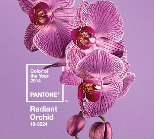 Orquídea radiante, color Pantone 2014