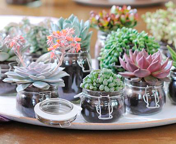 decorar con cactus y crasas. Black Bedroom Furniture Sets. Home Design Ideas