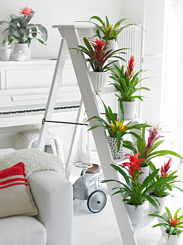 Escalera decorada con bromelias